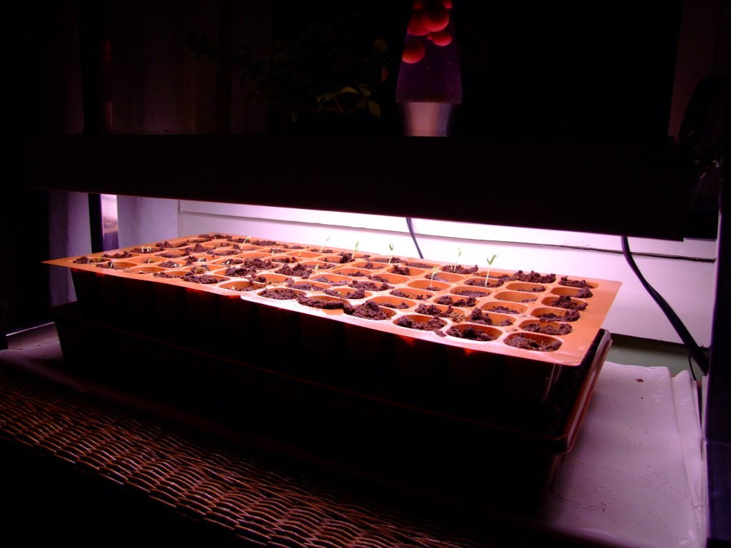 I got my babies a grow light!!